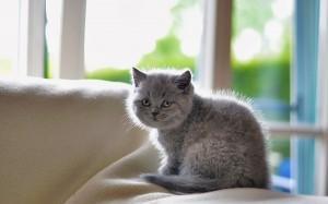 аллергия на запах мочи кота